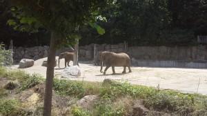 Слоны